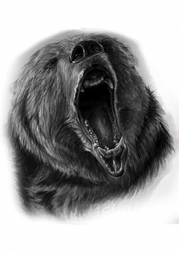 Картинки волка и медведя для тату