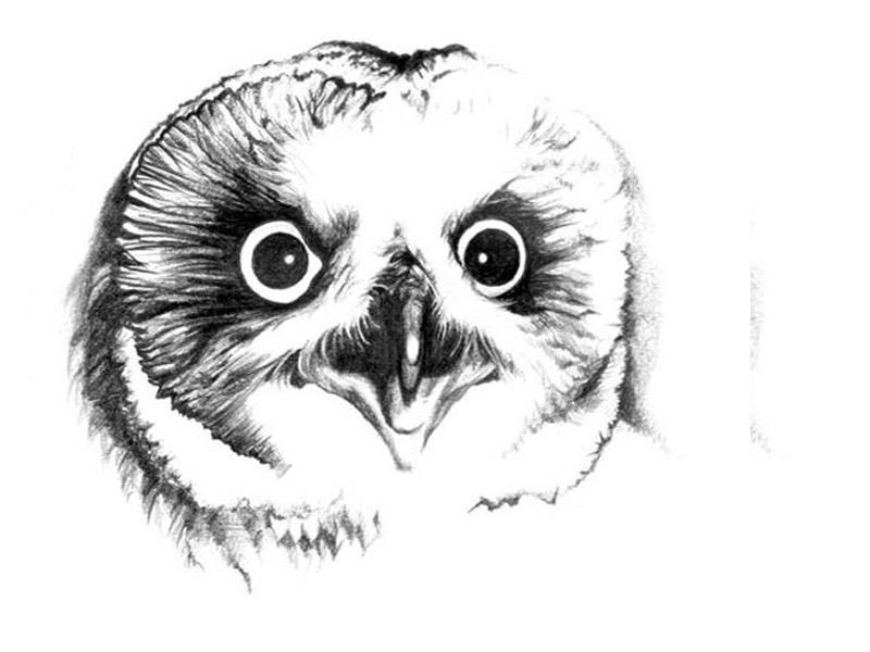 картинки тату сова